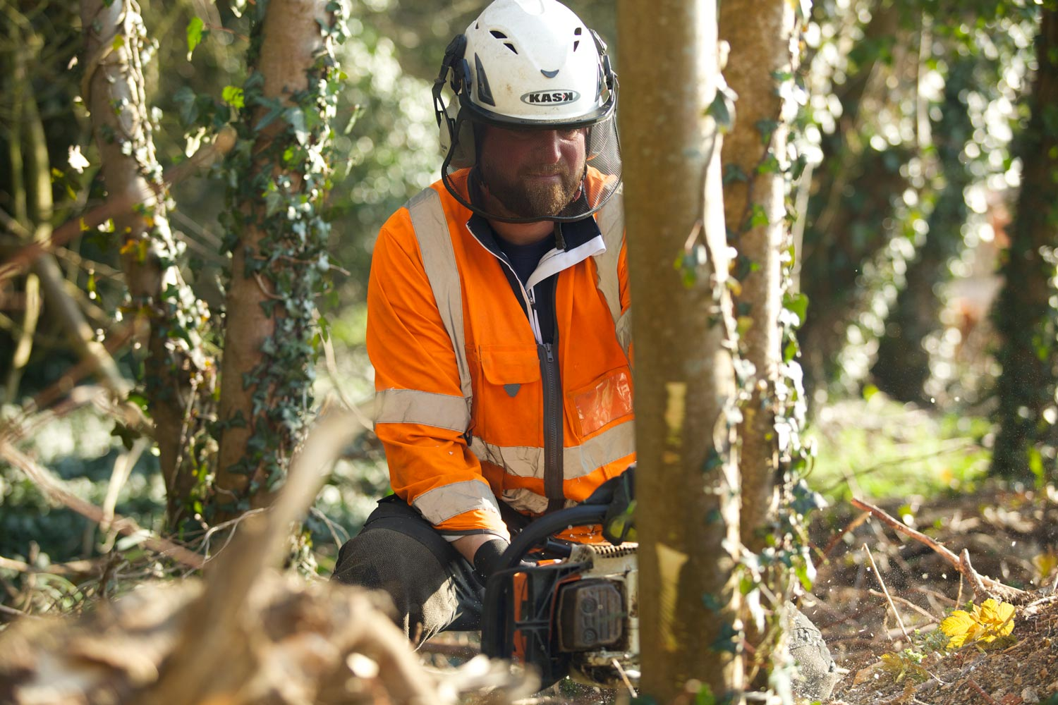 Tree Surgery Services - Atlas Tree Care Ltd